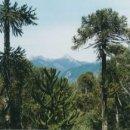 Académicos lanzan libro de investigación sobre el Bosque Nativo