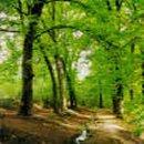 Implementan centro tecnológico para productores forestales